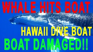 video Unbelievable, a huge humpback whale uses a boat as a back scratch-er http:www.oahudiving.com.