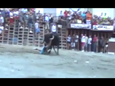 Cojida sin consecuencias SEGORBE Entrada de Toros y Caballos vacas y toros Sabado tarde 13 09 14
