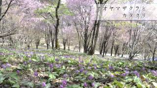 奥会津五町村観光PR動画