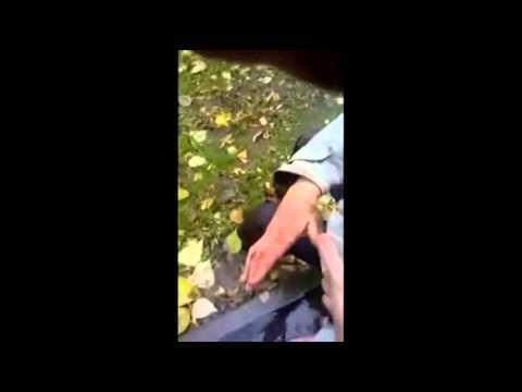 Пьяный в жопу мужик пытается дойти до дома Смотреть до конца