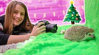 CHRISTMAS PHOTOSHOOT WITH MY HEDGEHOG