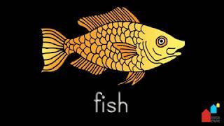 Parts of the Fish - Montessori Zoology Presentation