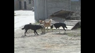 В Феодосии проведут тендер на отлов бродячих собак