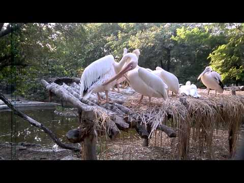 Nehru Zoological Park 4