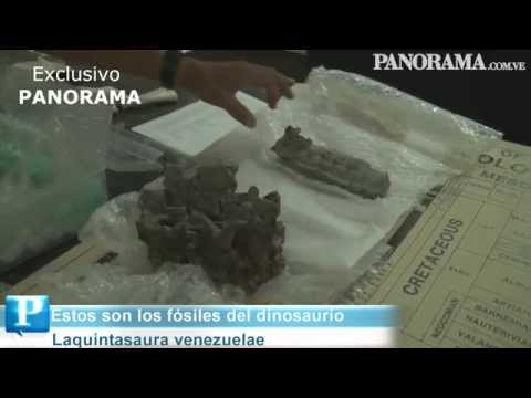 Fósiles del dinosaurio venezolano están en LUZ
