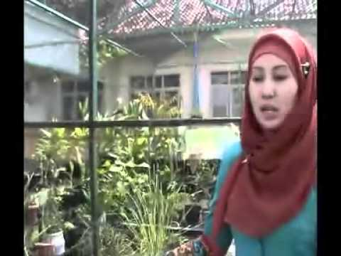 Sdn Model Banyuwangi video