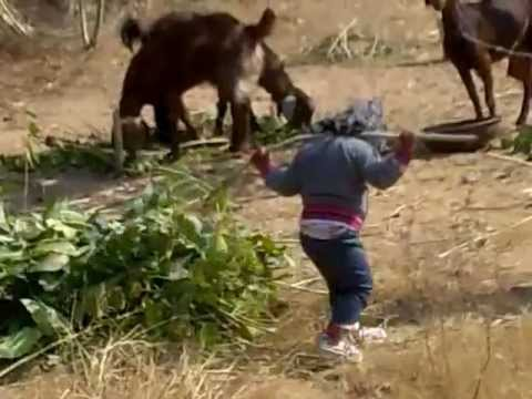 Rajasthani Girl Playing With Nature video