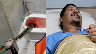 Python Bites Penis Of Man On Toilet And Doesn't Let Go
