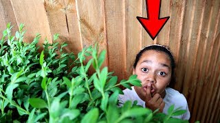 BEST HIDE AND SEEK SPOT IN MY GARDEN!!