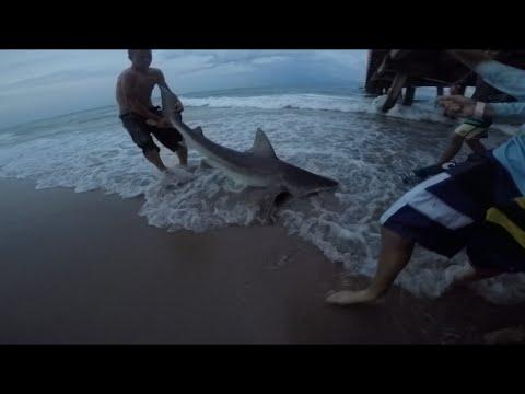 Sandbar Shark at Anglins Fishing Pier