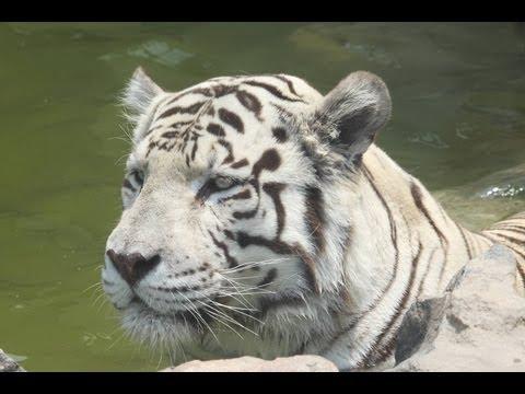 Visita parque zoologico Huachipa