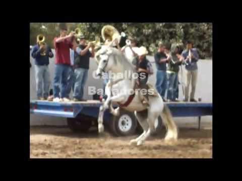Caballos Bailadores - Ejemplos de un Mal Entrenamiento