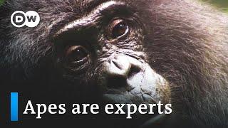 Medicine from the jungle - rainforest pharmacy | DW Documentary