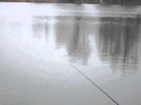 Wędkarstwo | Pstrągi, Płocie Okonie, (feeder, Spławik) [KRK WĘDKUJEMY]