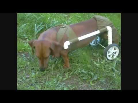 Инвалидная коляска для собаки своими руками