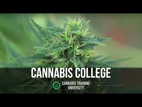 Medical Marijuana Online Certificate! How To Grow Marijuana