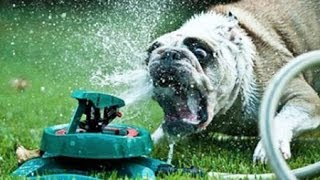 Funny Dogs vs Sprinklers Compilation 2013
