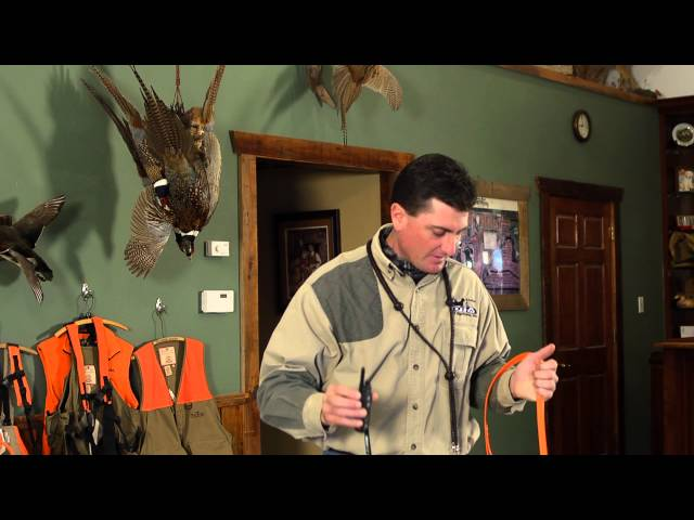 D.T. the Dog Training Video 5   Introducing E-Collar and Formal Obedience