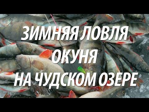 правила ловли рыбы на чудском озере