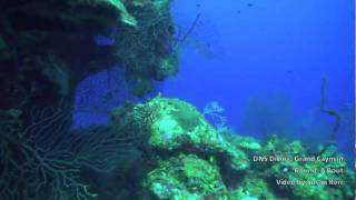 DNS Diving, Grand Cayman, Round A Bout