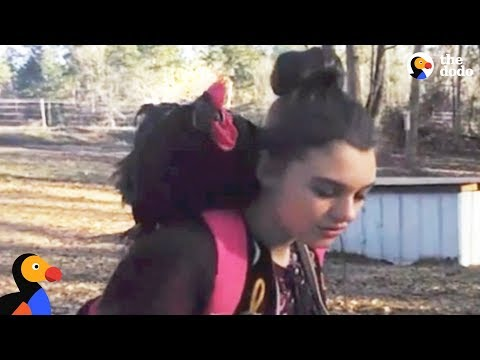 Rooster Meets His Favorite Girl at Her Bus Stop Every Day | The Dodo