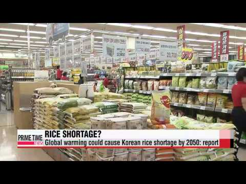 Global warming could cause Korean rice shortage in 2050: report   ″온난화 탓...