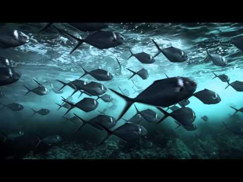 """Télévision. Aujourd'hui, protégez les requins en faisant un """"requin d'avril"""" avec Canal +"""
