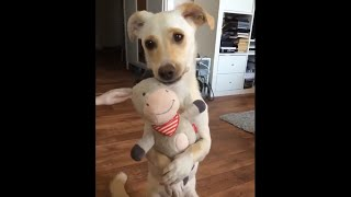 These DOGS are so CUTE & FUNNY | Best dogs of 2018