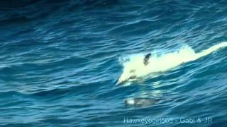 The Ocean Goldripp Remix) ~ Chill Out Ibiza Vol  3 ~ Dolphins & Humpbacks Love of the Ocean [HD]
