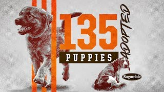 Over 100 Puppies Find Homes! 🐾 | Cleveland Browns