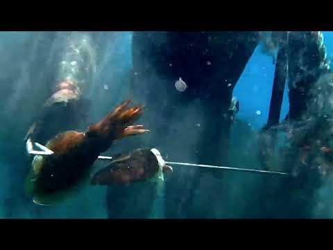 Ψαρια στα ρηχα