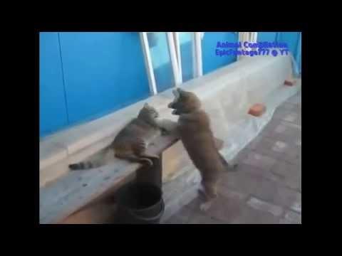 Приколы с котами и собаками
