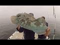 Ling Cod Fishing: Morro Bay, Ca. Lings & Thangs In HD