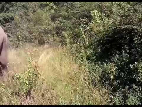 Dangerous Elephant Attack in Wasgamuwa Sri Lanka