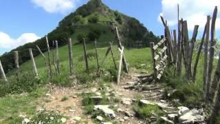 Fioritura peonie Monte Gorgona