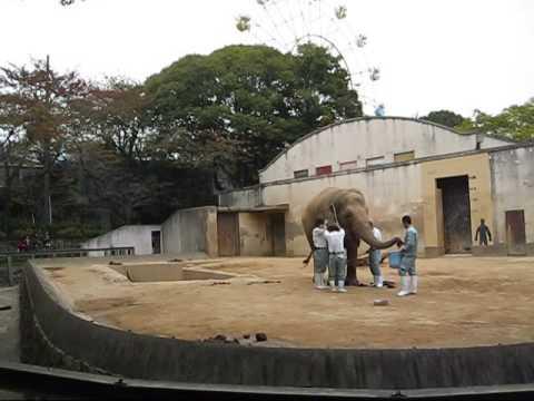 象のエサやり