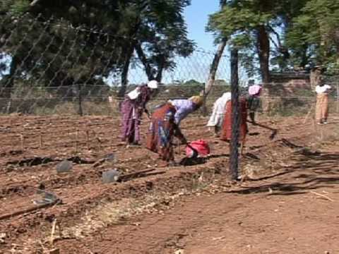 Sex workers become farm workers in Zimbabwe - YouTube