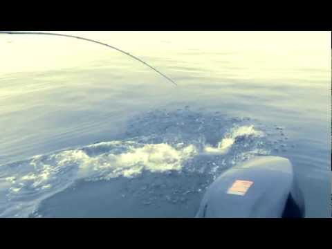 HD version Salmon Fishing Vancouver Island
