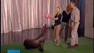 Jack Hannah on Ellen DeGeneres