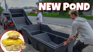 BUYING $700 *NEW* TURTLE POND!!!