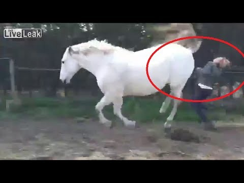 Woman Takes Horse Kick To The Face - YouTube