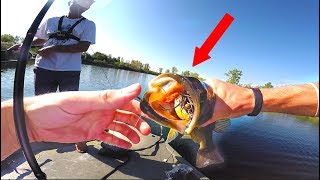 Fish DESTROYS Topwater Frog In Clear Water