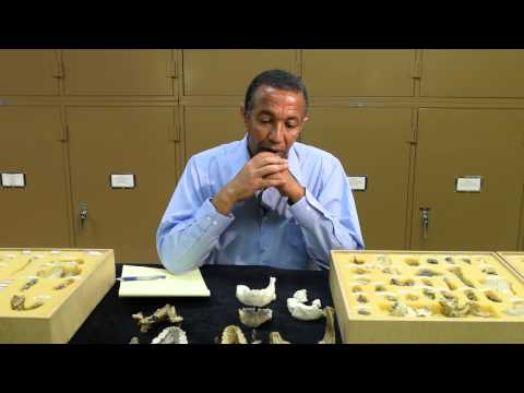 New Human Ancestor Species from Ethiopia - May 2015