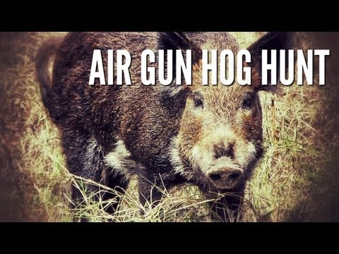 Hog Hunt With Airgun - GAMO Hunter Extreme .25 caliber