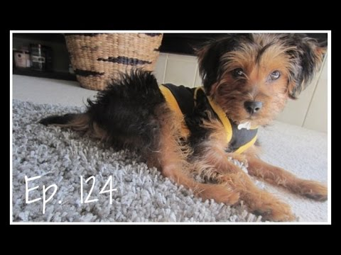 Cute Clothing Haul Ep Cute Puppy Clothing