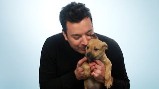 Jimmy Fallon Plays With Puppies While Answering Fan Questions