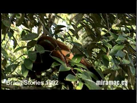 BRAZIL STORIES-AMAZON ECO TOURISM.mov
