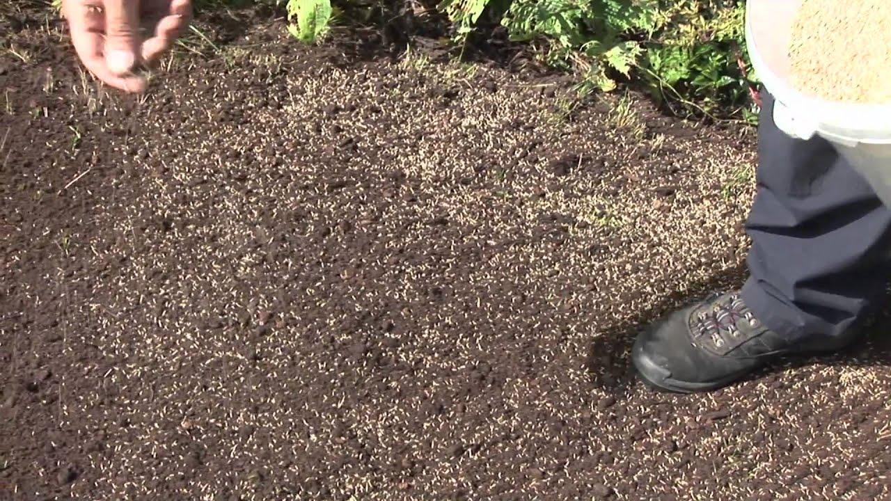 Как правильно посеять и посадить газон на даче своими руками 14