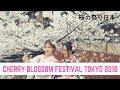 Lagu Cherry blossom festival japan 2018  cherry blossom in japan  nara park japan  隅田川
