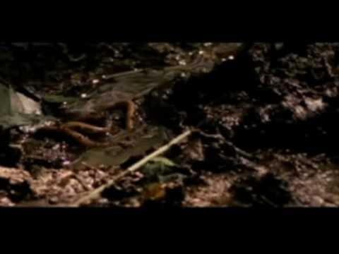 Cryptopsy - Pestilence That Walketh In Darkness Psalm 91 5-8